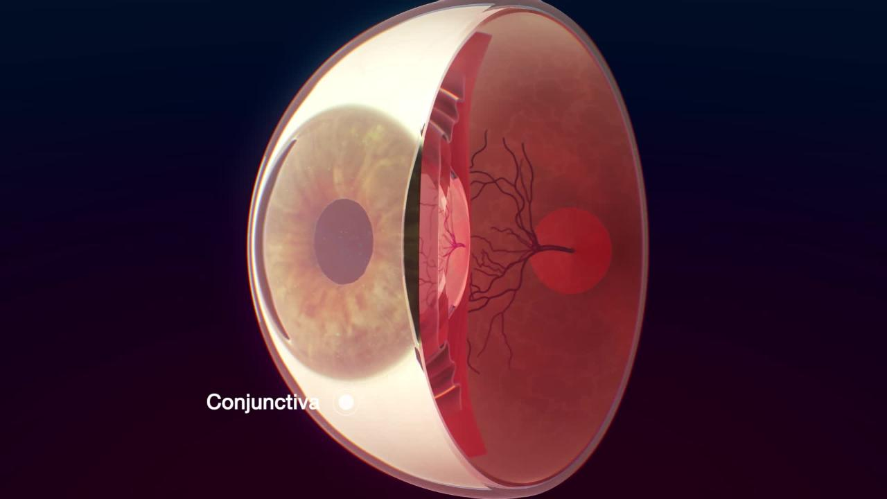 The Conjunctiva