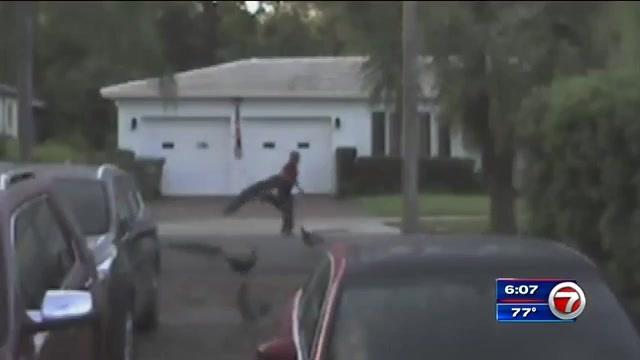 Man caught on camera snatching peacock outside Coconut Grove home