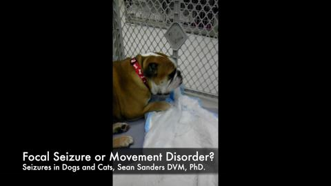 Sanders Seizures In Dogs And Cats