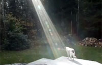 Light Shines Down on Soldier's Dog