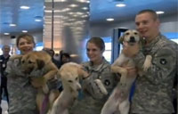 War Dogs Reunite with Soldiers