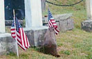 Woodchuck Steals Flags Off Vets Graves