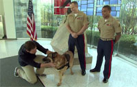 Meet Lucca, USMC Hero Dog