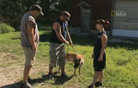 Training 'Alpha Dogs' for Afghanistan