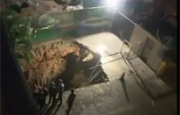 Sinkhole Swallows Security Guard