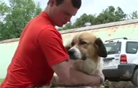 Soldier Reunites with Afghan Dog