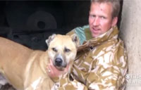 Soldiers Reunite with Afghan Dogs
