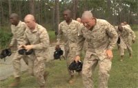 Marine Recruits Do Gas Chamber