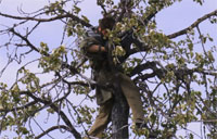 Former Recon Marine Falls from Tree