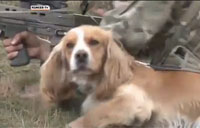 Military Dogs Prep for Sounds of Combat