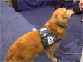 Sea-Air-Space: Warrior Canine Connection