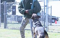 Malmstrom's Military Working Dogs