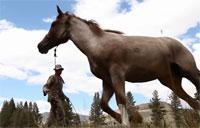 Animal Packers and Horsemanship Training