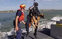 CG Canine Explosive Detection Team Hoist Training